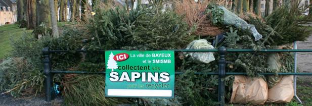 Sapin de noël : plutôt que les jeter, on peut les recycler !